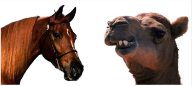 A camel is a horse designed by committee