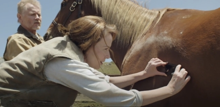 AlivecorECG being used on horse